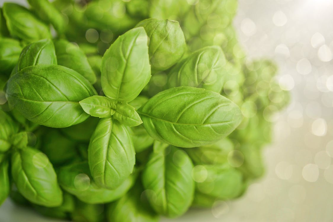 Selective Focus Photography of Green Basil Leaf