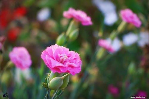 Free stock photo of طبيعة, جمال, أزهار, زهور
