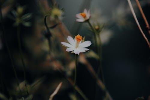 Fotos de stock gratuitas de colores, crecimiento, flor, flora
