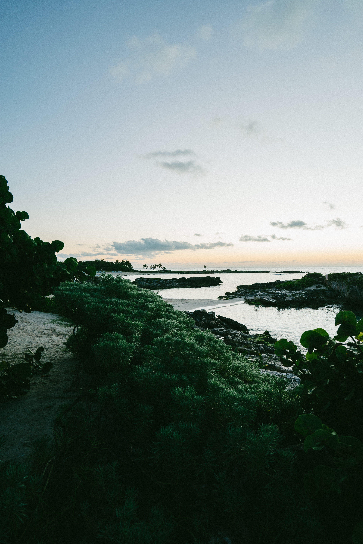 Green Trees Beside Sea Landscape Photography