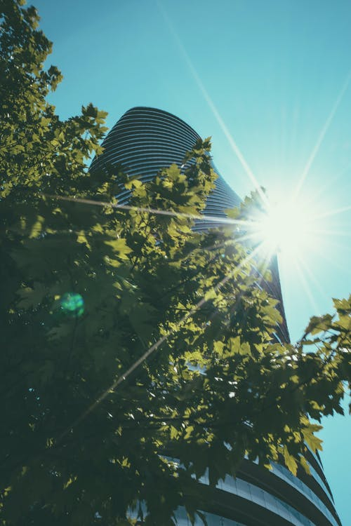 Gratis stockfoto met architectuur, blauwe lucht, bomen, curves