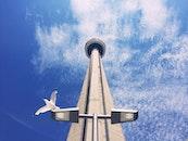 city, flight, bird