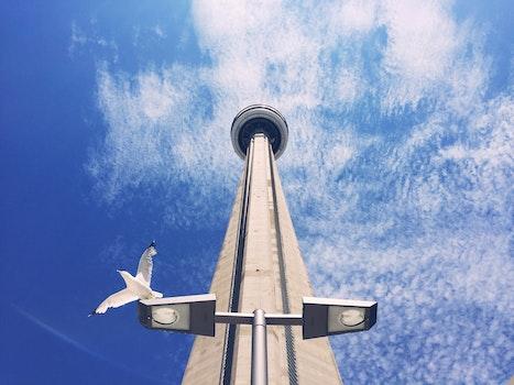 Free stock photo of city, flight, bird, building