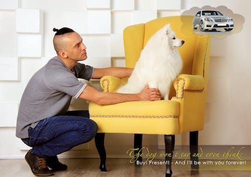 Бесплатное стоковое фото с белые собаки, домашние животные кутюрье simba, забавные домашние собаки, красивые собаки