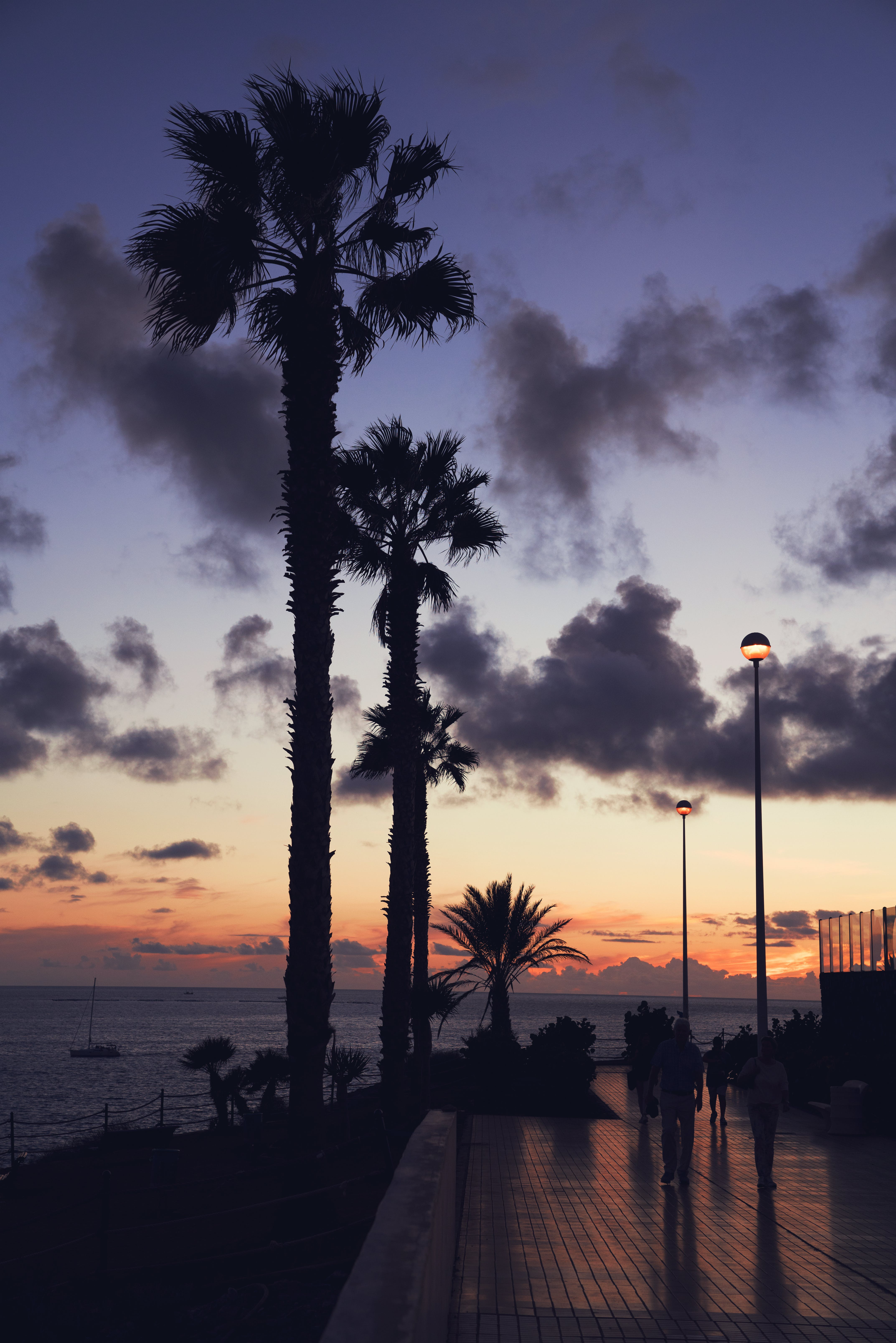 Silhouette Photography of Palm Trees Near Sea