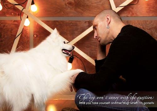 Бесплатное стоковое фото с белые собаки, вопросы о собаках, домашние животные кутюрье simba, жизнь после смерти