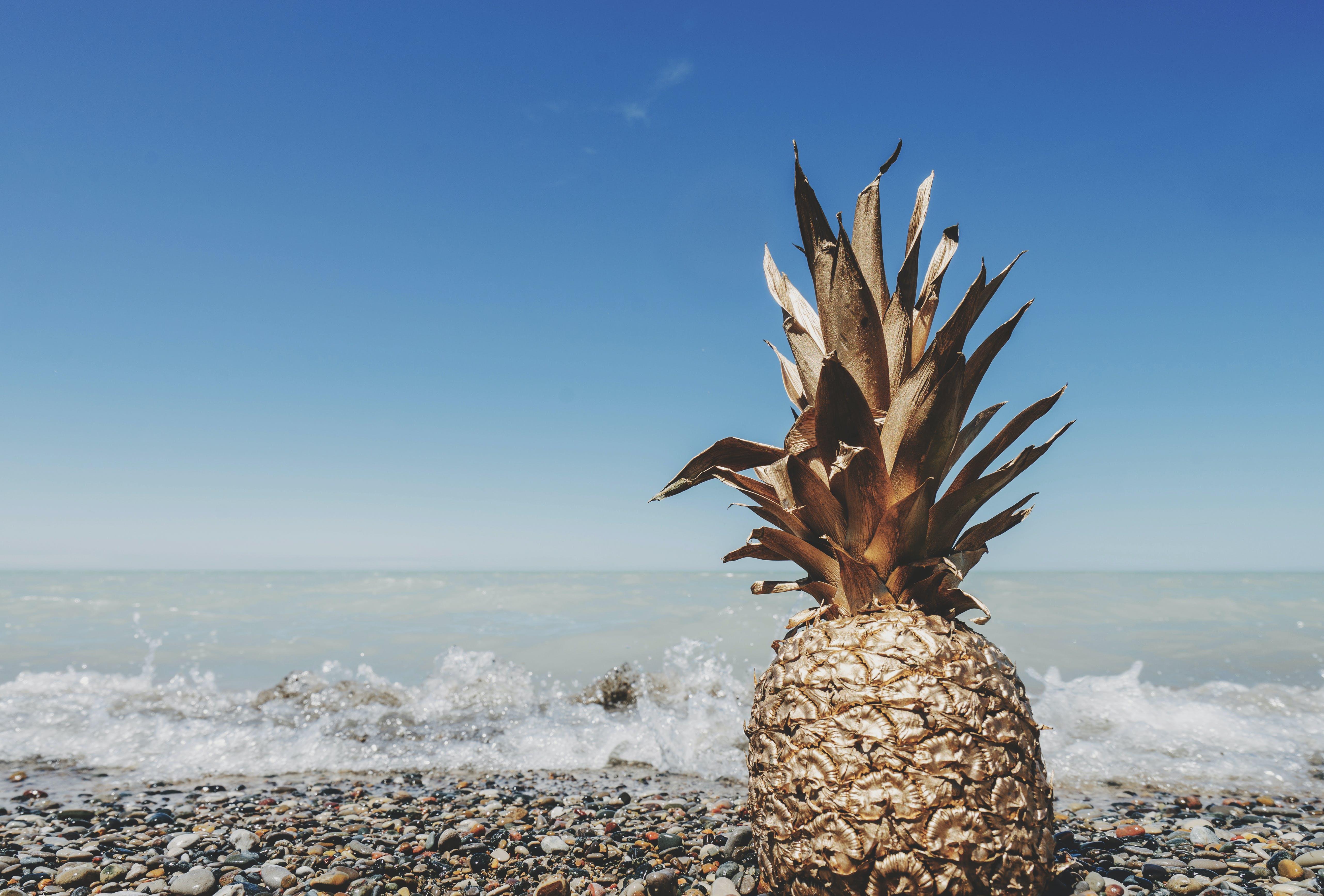 ananas, felsen, frucht