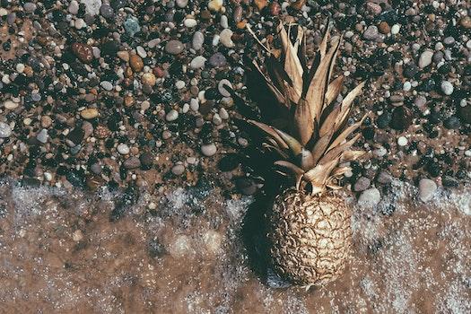 Free stock photo of beach, art, water, pineapple