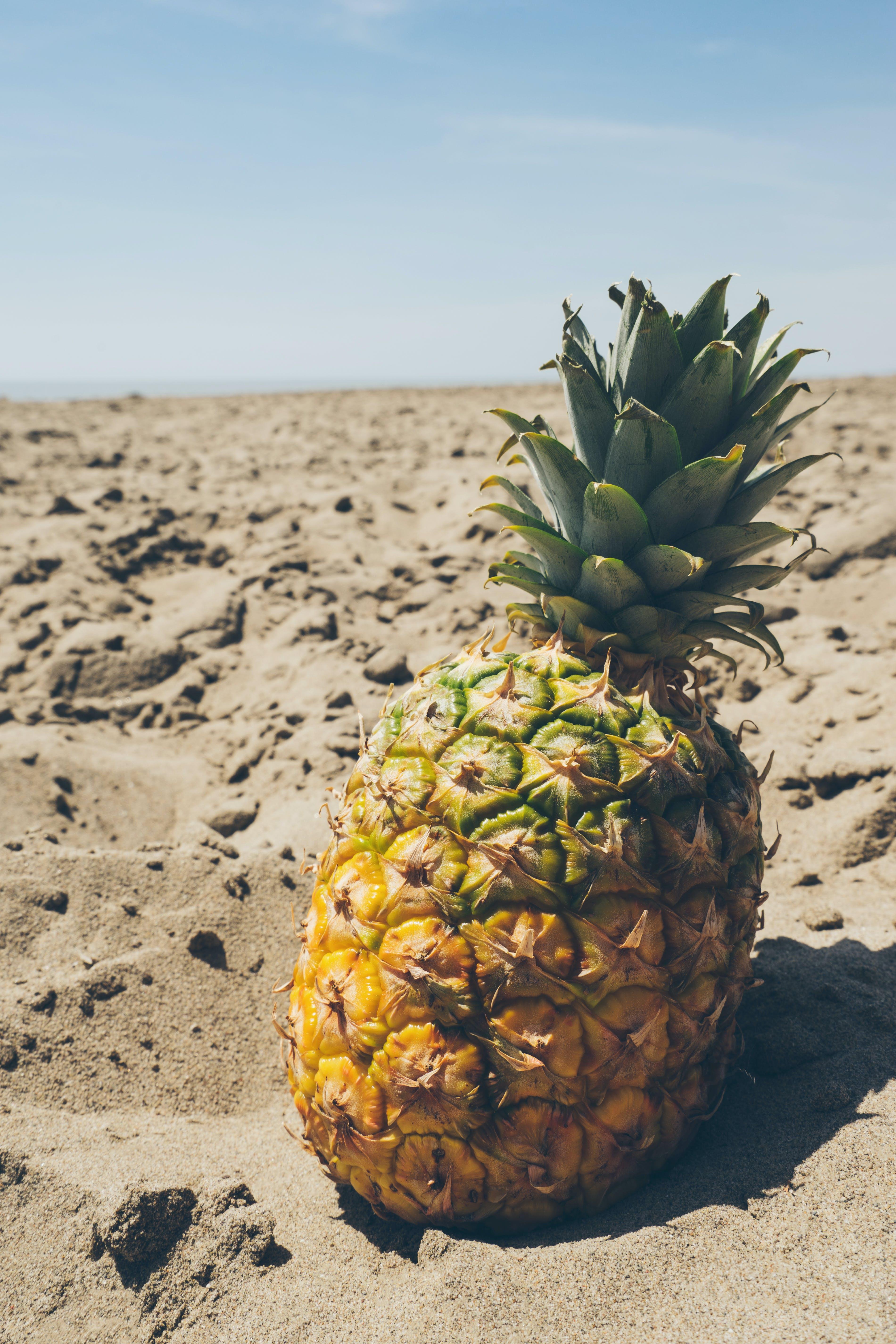 Gratis stockfoto met ananas, beachlife, blauwe lucht, blikveld