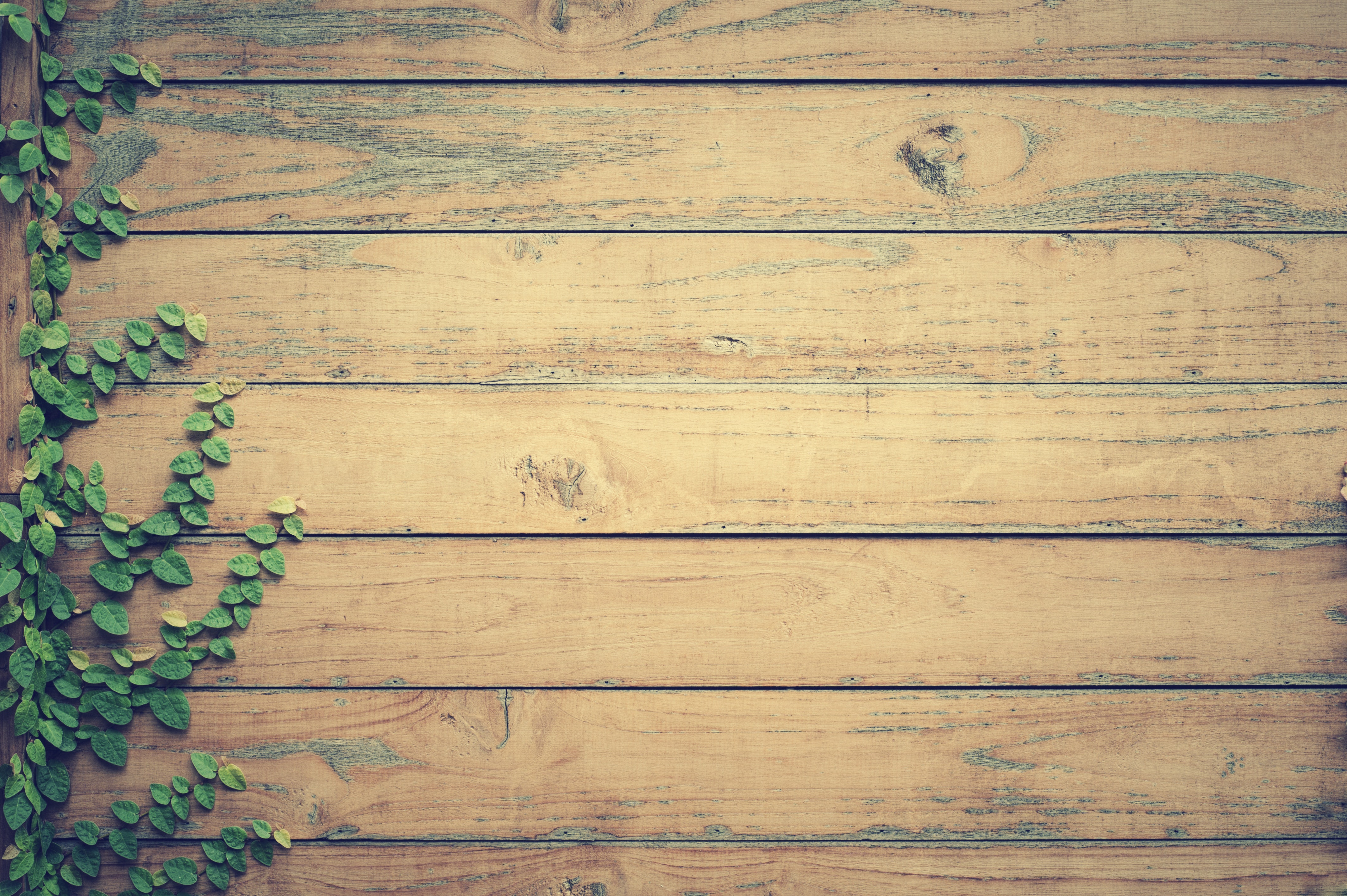 Free Stock Photo Of Hardwood Leaves Lumber