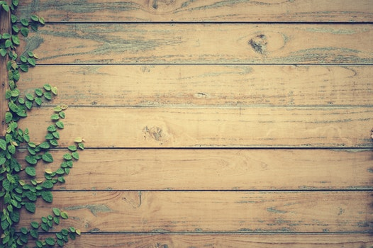 Free stock photo of wood, leaves, timber, wood planks
