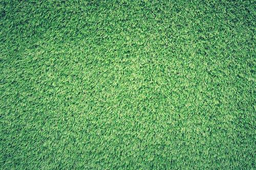 Trawnik Zielony
