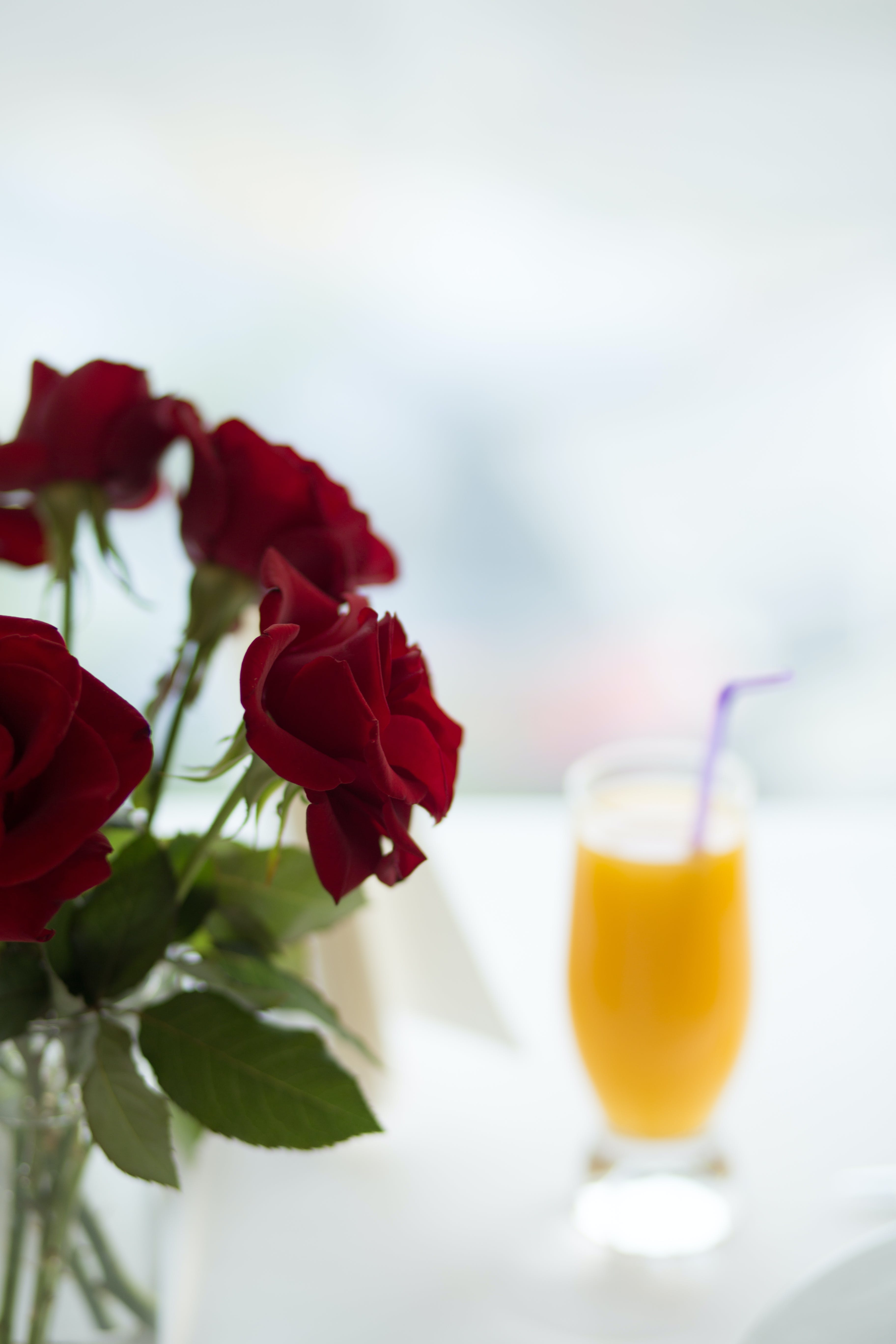 Selective-focus Photo of Red Roses