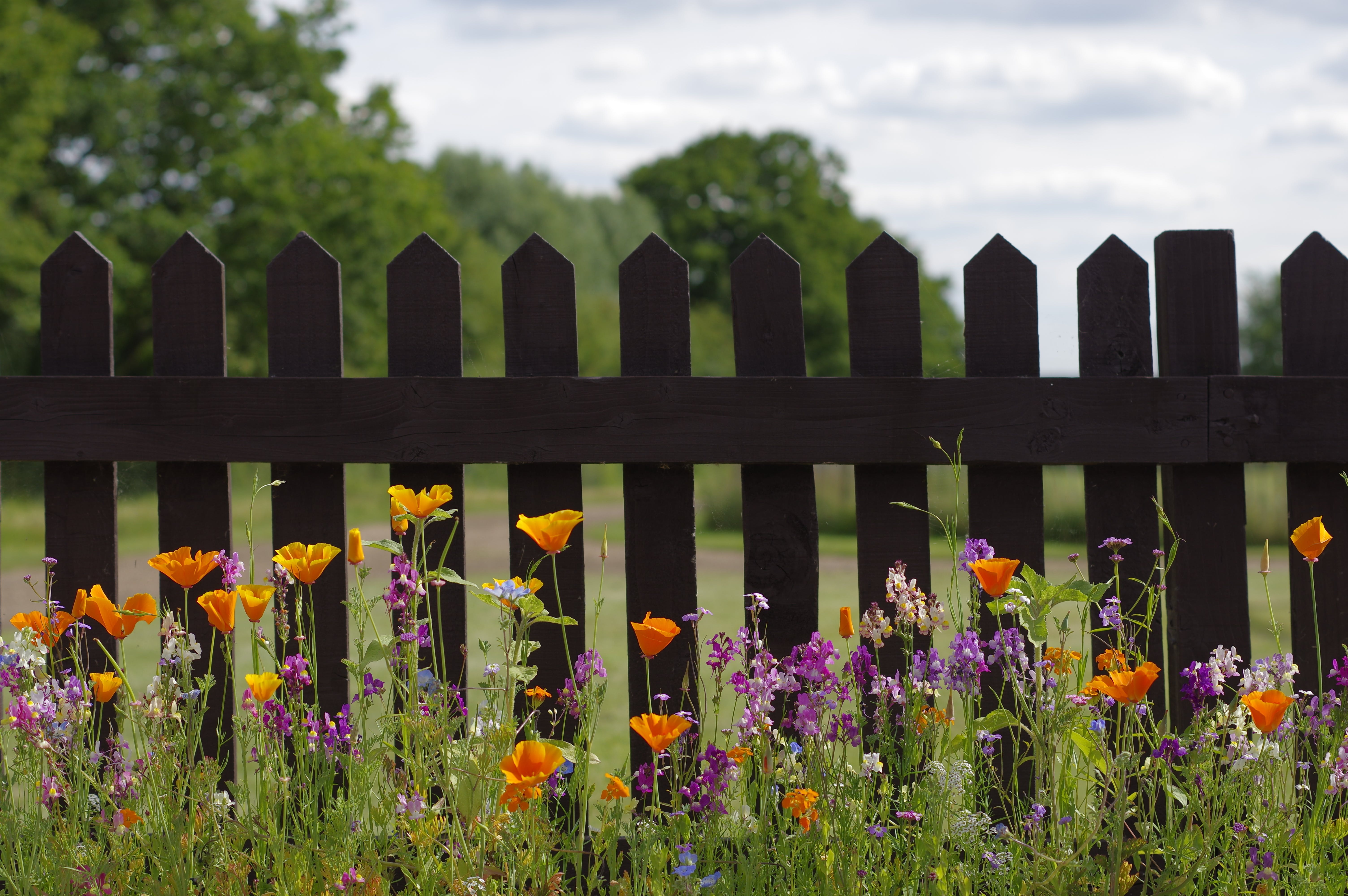 Free stock photo of beautiful flowers, fence, spring flowers, wild flowers