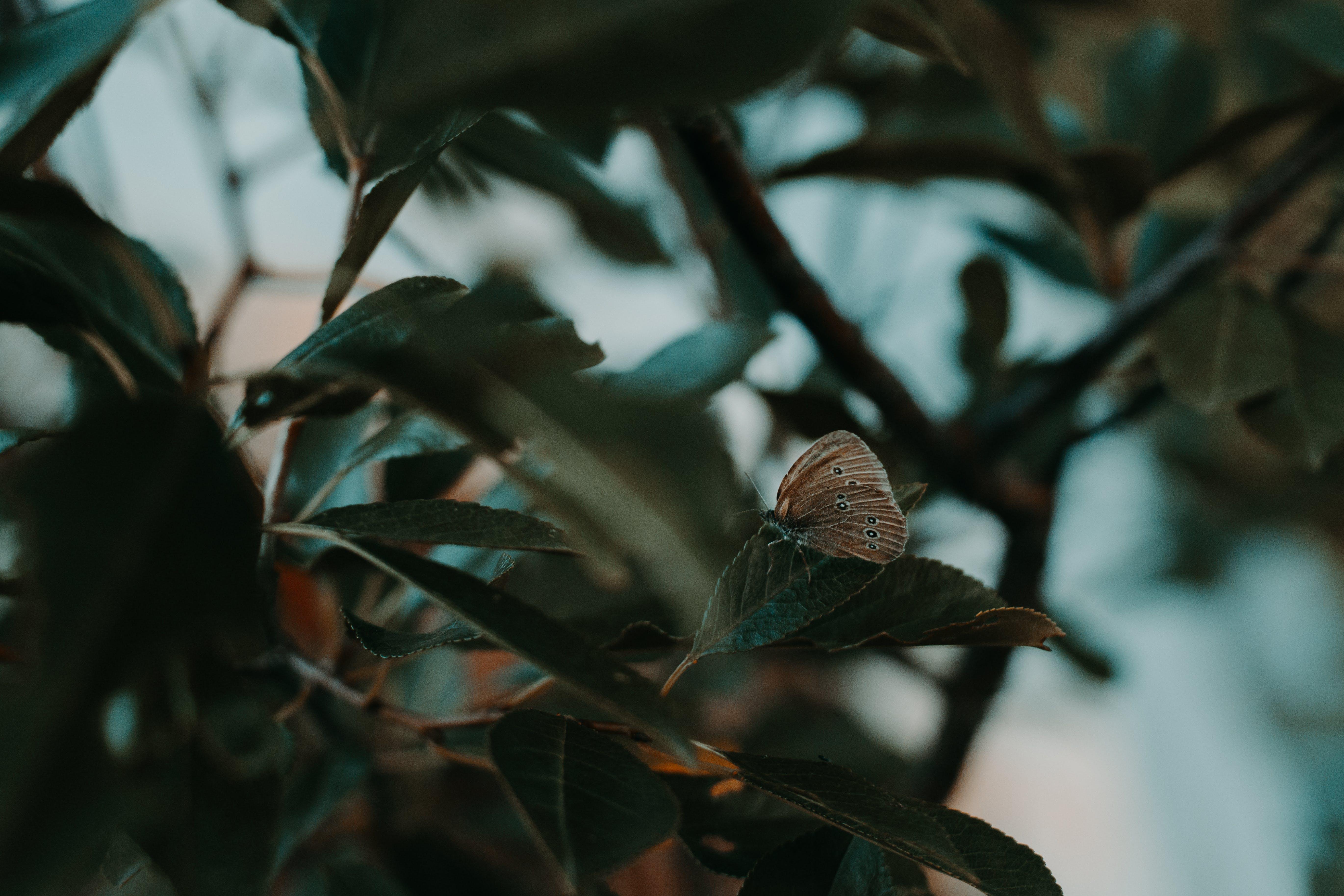 Fotos de stock gratuitas de árbol, bonito, color, efecto desenfocado