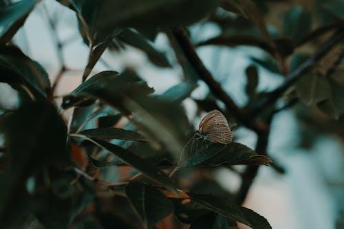 Photos gratuites de arbre, automne, brouiller, couleur