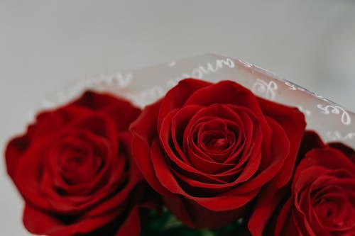 Bouquet Of Red Roses In Close-up View