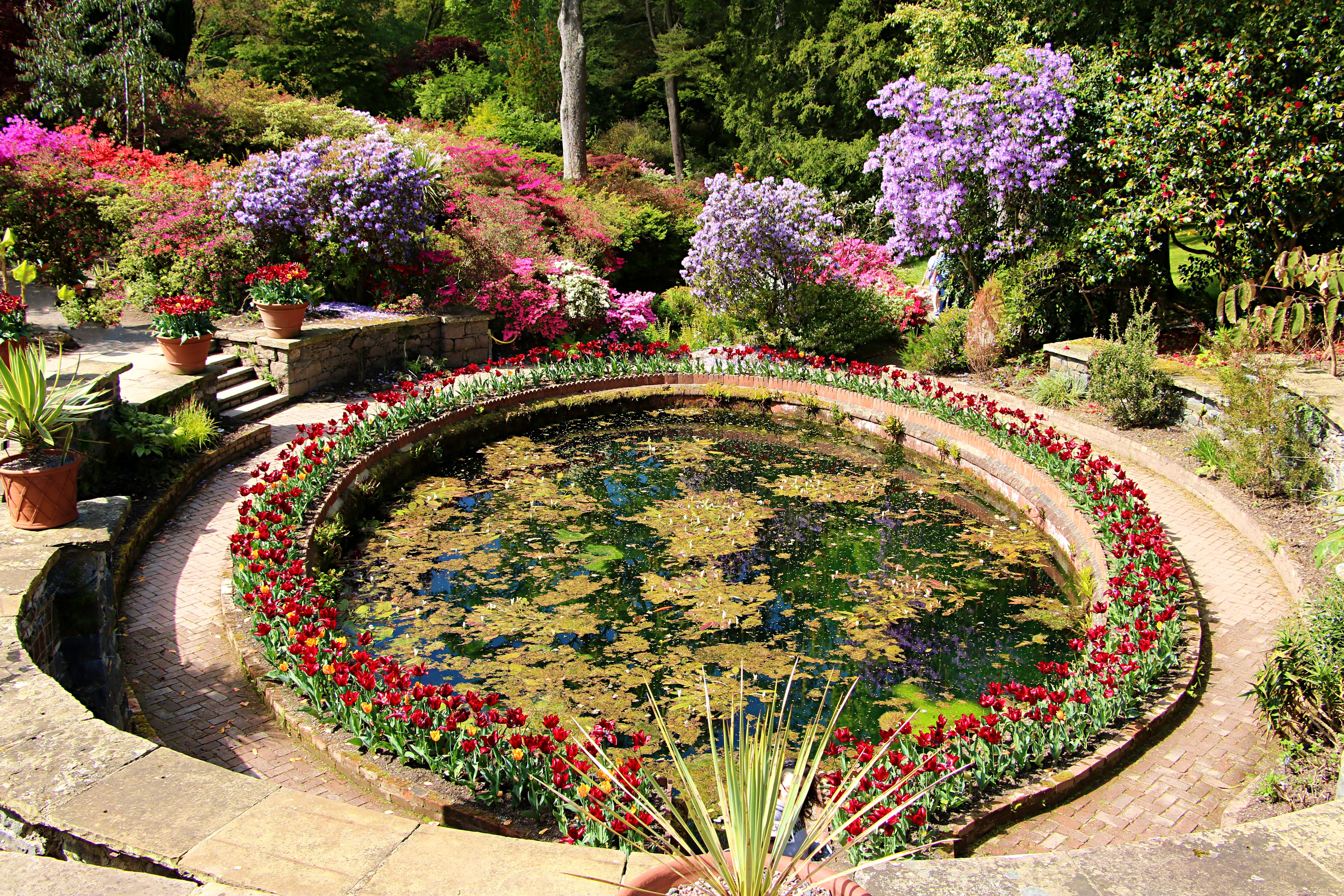 Free stock photo of beautiful flowers, botanical gardens, water colours