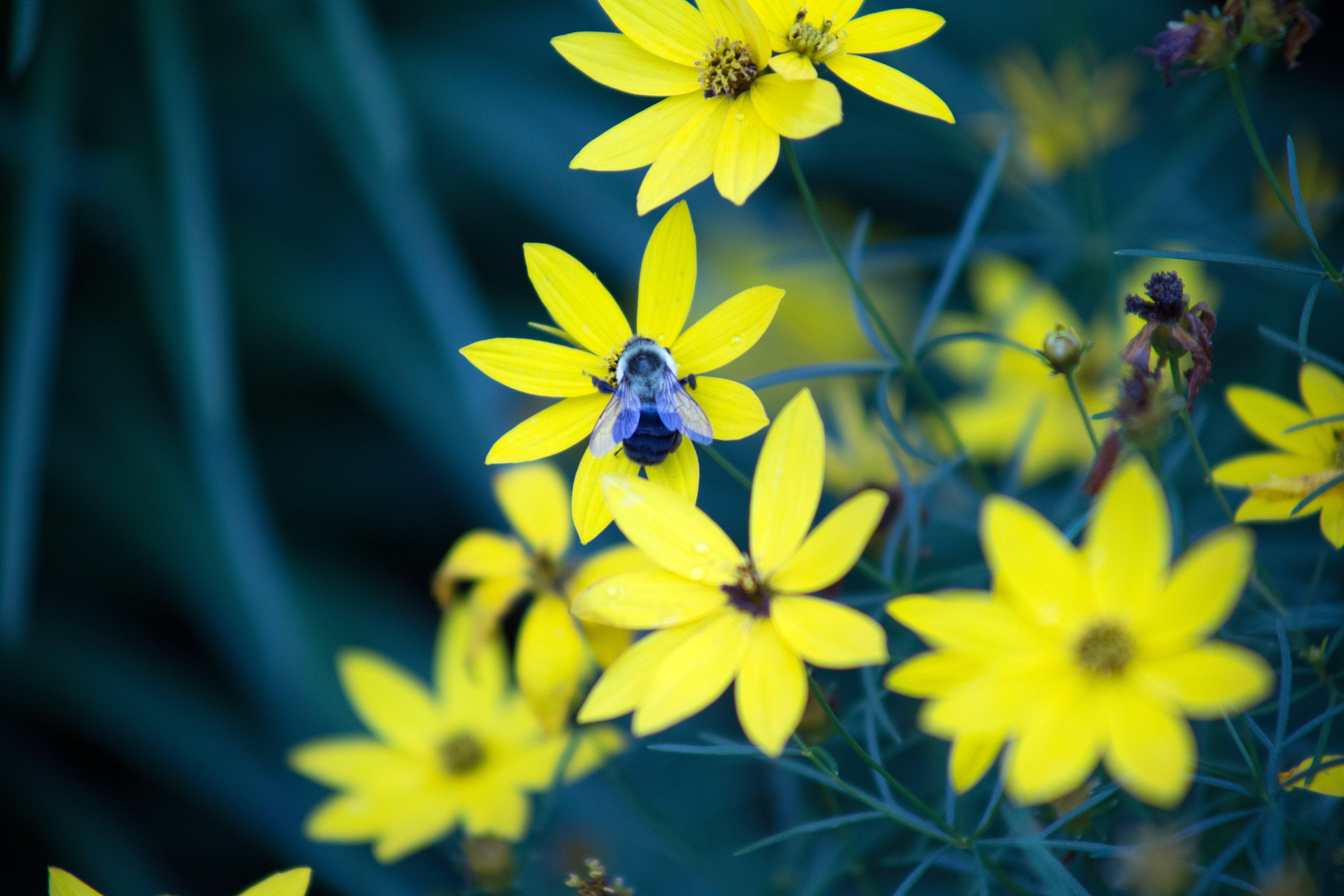 Yellow Petal Flowers