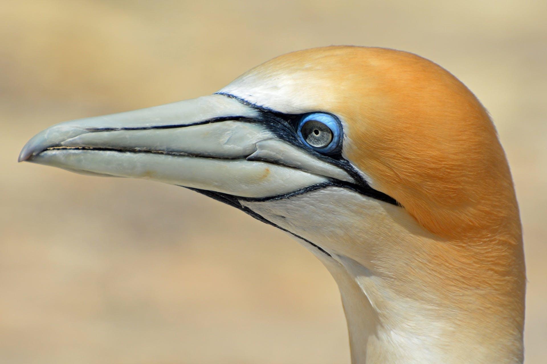 Orange White Bird