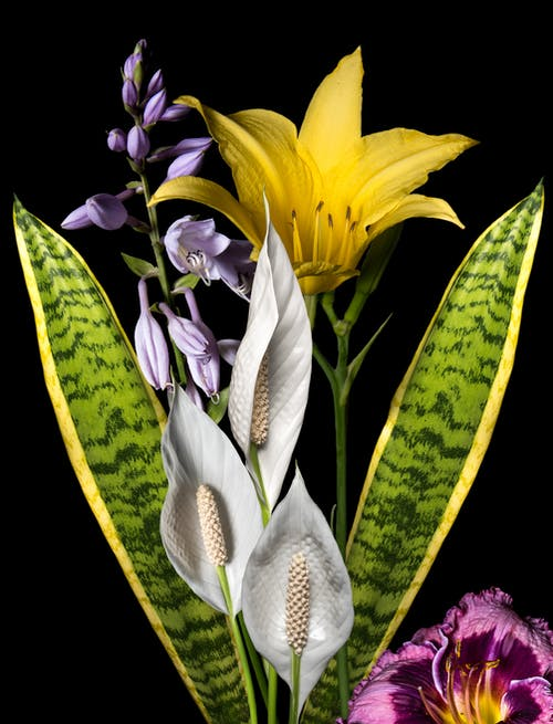 Free stock photo of flower bouquet, flowers, peace lilly