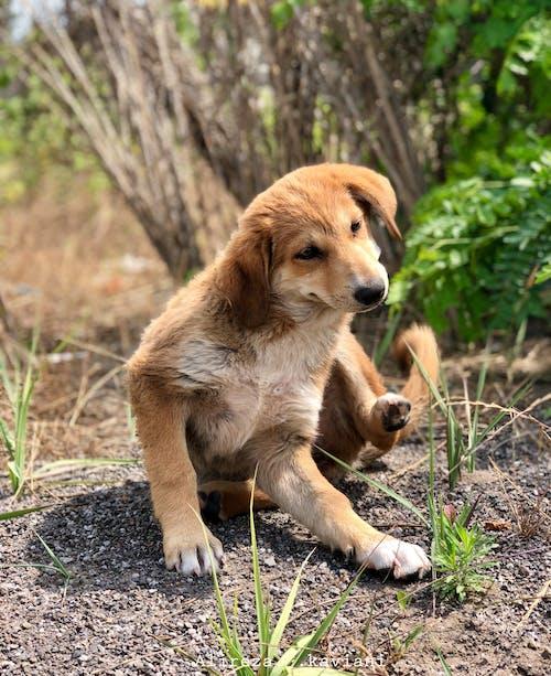 Základová fotografie zdarma na téma #dog, Adobe Photoshop, fotka, fotky