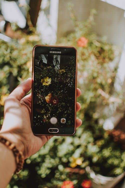 Kostenloses Stock Foto zu ausrüstung, berührungsempfindlicher bildschirm, bildschirm, blumen