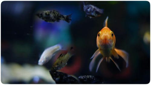 Free stock photo of aquarium, beauty, fish, underwater