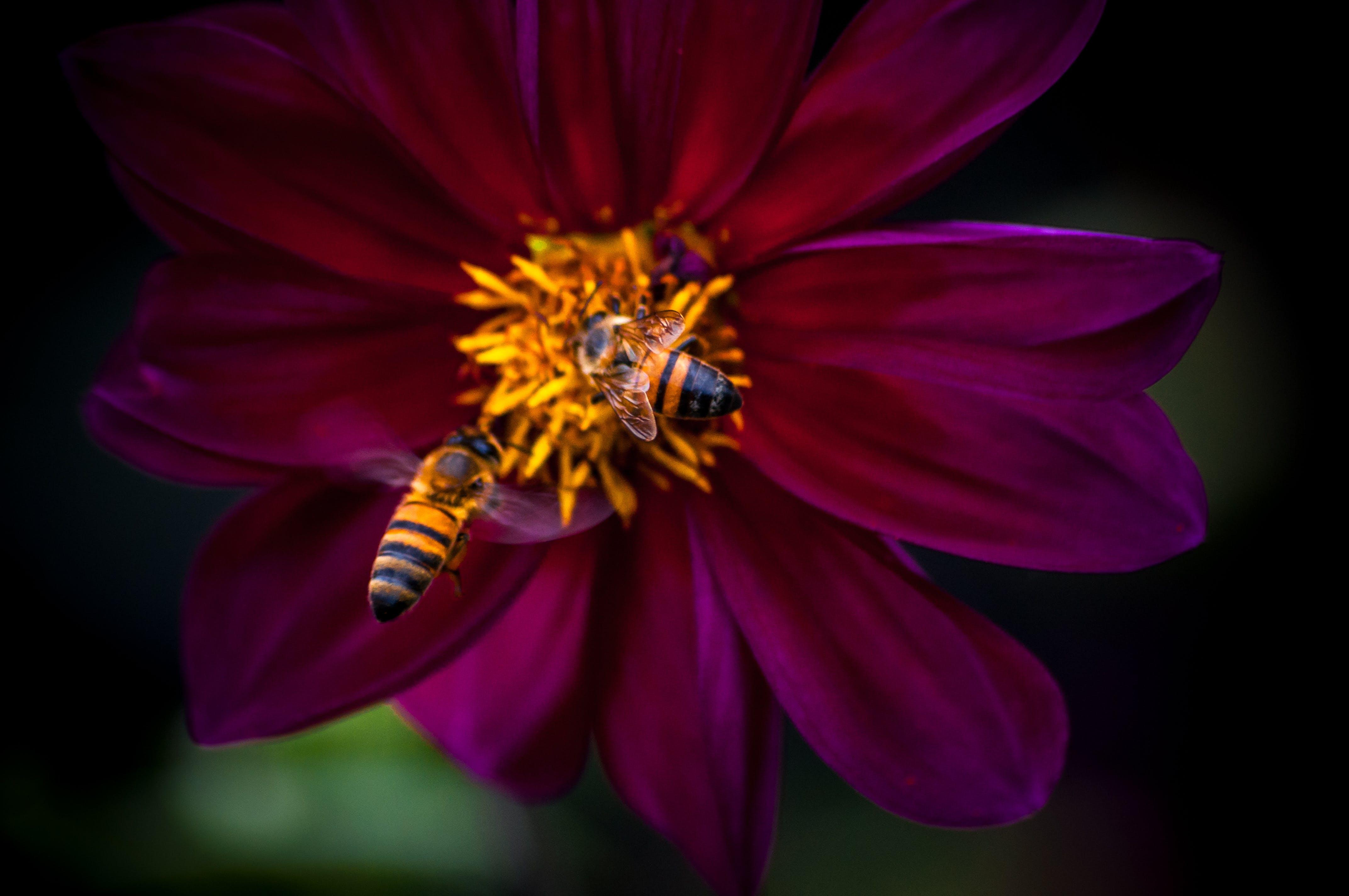 Gratis lagerfoto af bestøvning, bier, blomst, blomstrende