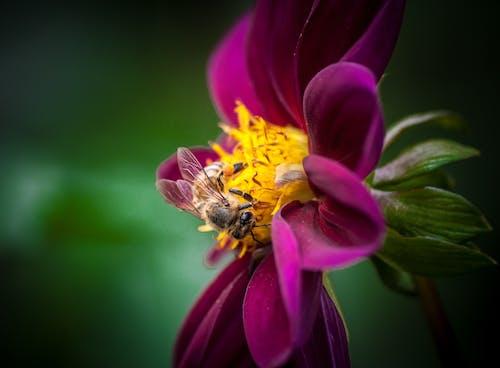 Fotos de stock gratuitas de abejas, alas, bonito, brillante