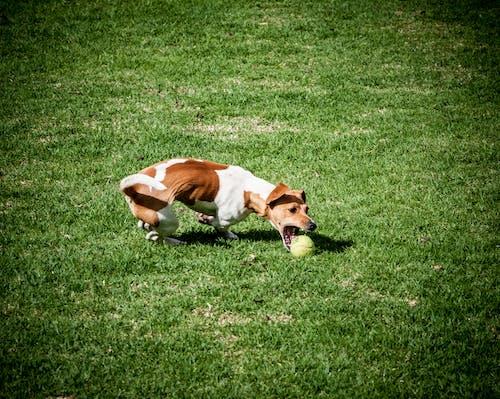Immagine gratuita di ambiente, animale, animale domestico, campo