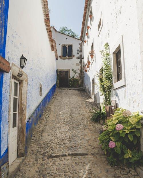 bitkiler, camlar, görünümler; manzaralar, obidos içeren Ücretsiz stok fotoğraf