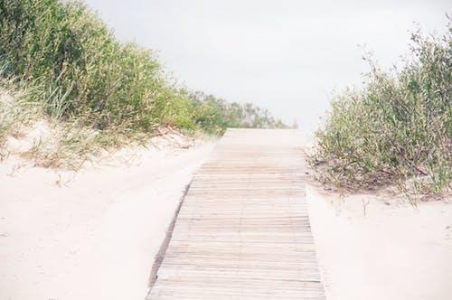 Základová fotografie zdarma na téma nikdo, pěší stezka, písečné duny, písek