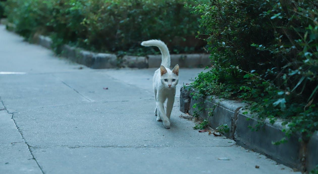 Short-coated Cat Walking Near Bushes