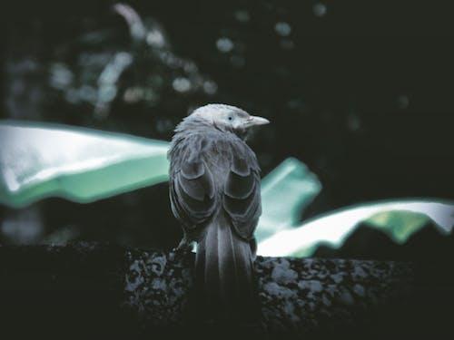 Immagine gratuita di Adobe Photoshop, canon, fotografia della natura, vita nella natura