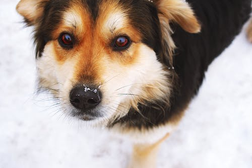 Selective Focus Photo of Black and Tan Dog over Snow Ground
