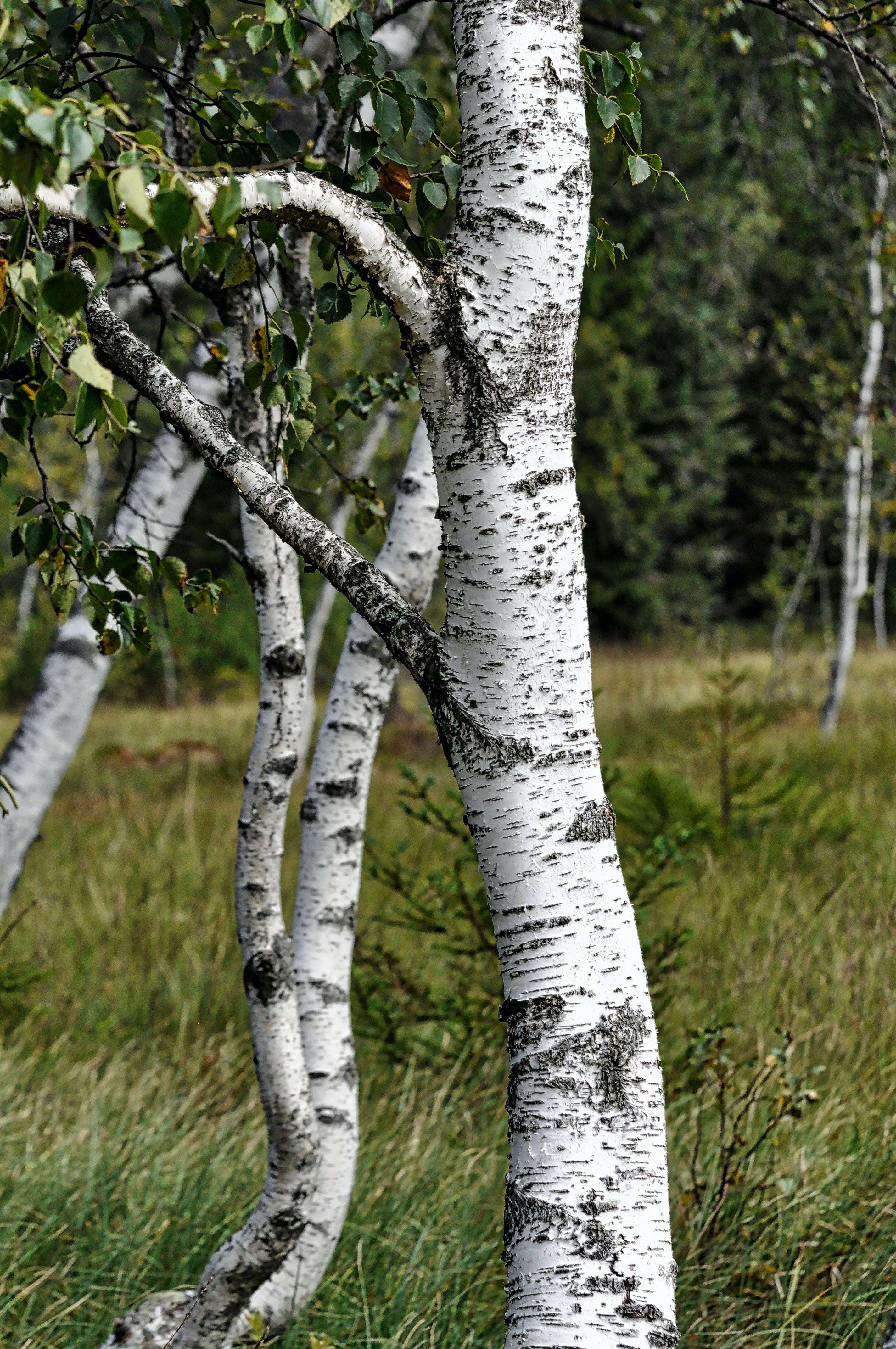Ingyenes stockfotó erdő, fák, hirdetés, kalandvágy témában
