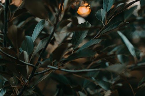 Foto stok gratis bagus, cabang, gelap, hijau
