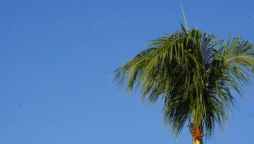 Kostenloses Stock Foto zu blauer himmel, palme, sommer