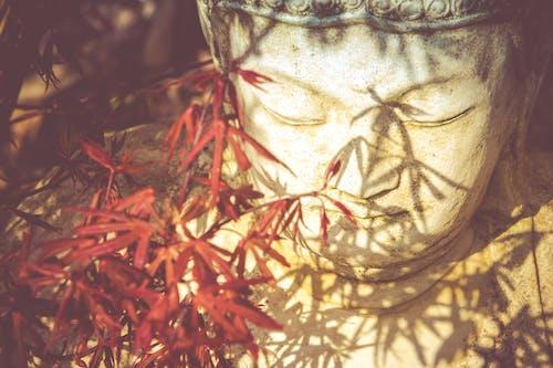 #佛, #佛教, #楓 的 免費圖庫相片