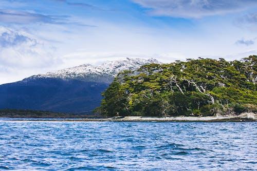 #snowcapped, #山, #森林, #海 的 免費圖庫相片
