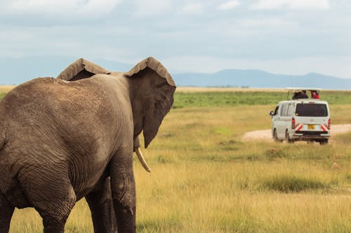 Free stock photo of #Africa, #elephant, #kenya, #safari