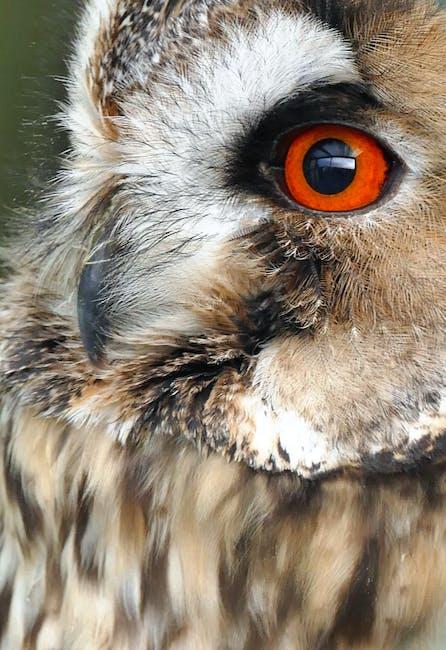 New free stock photo of bird, animal, close-up view