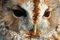 eyes, close-up view, animals