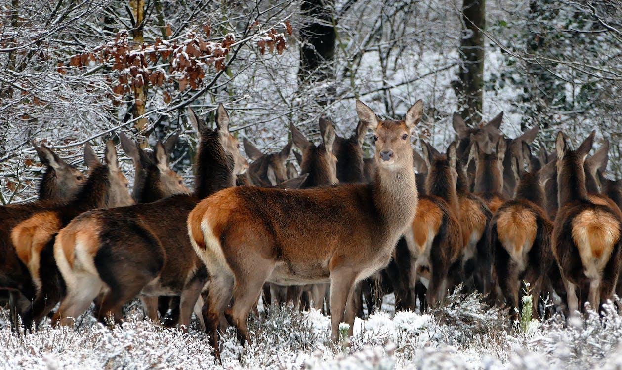 Herd of Deer on Forest