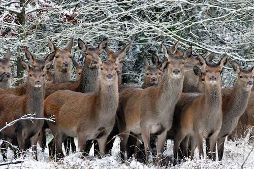 Herd of Llama