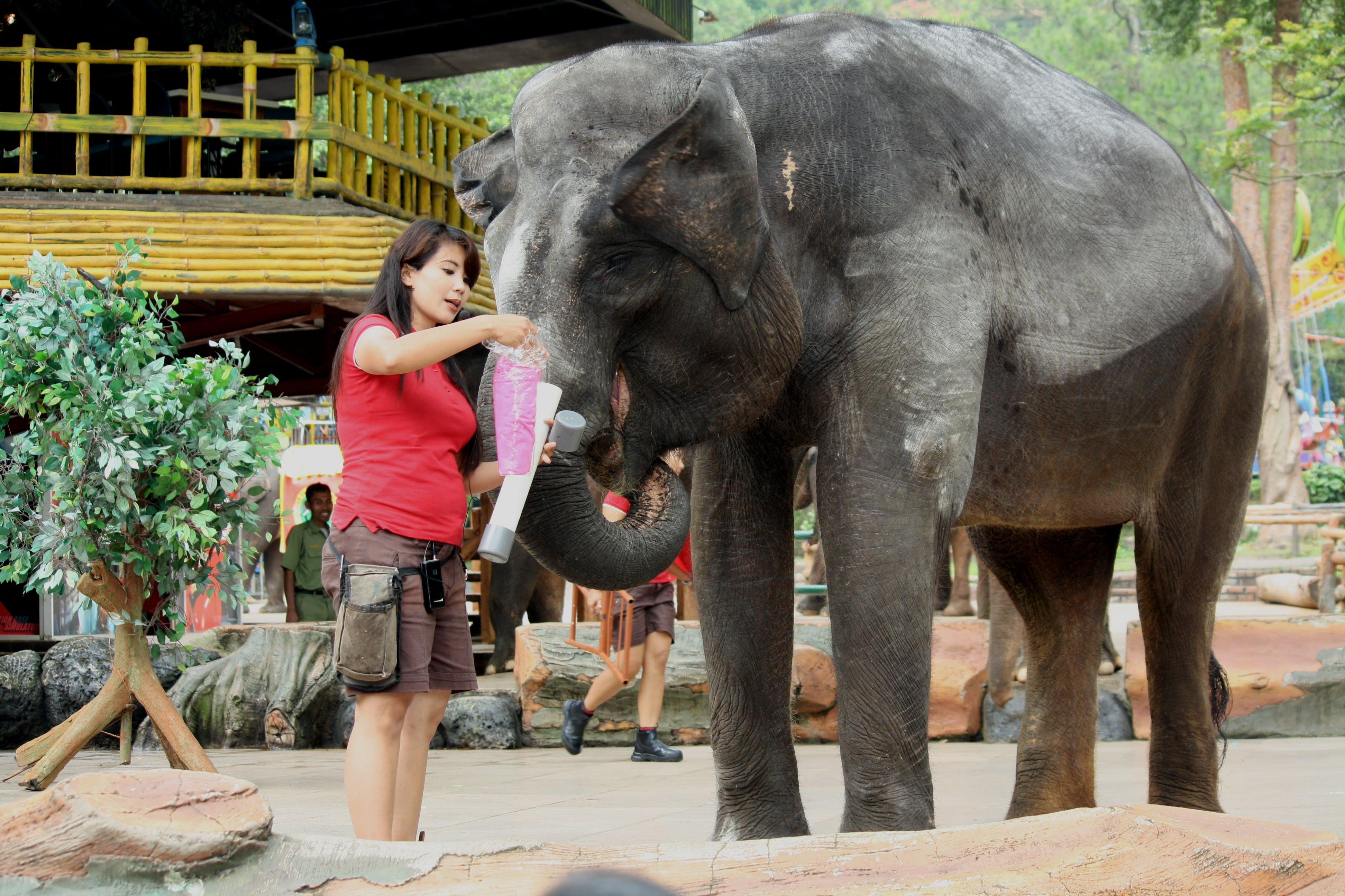 Person Feeding the Elephant