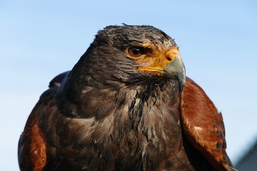 Free stock photo of brown, animals, birds, beak