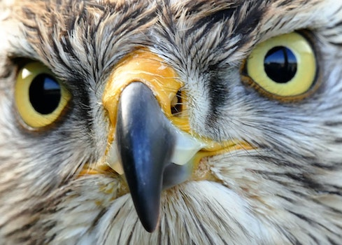 Free stock photo of bird, eyes, close-up view, birds