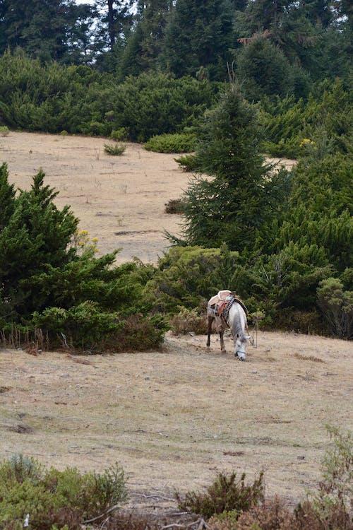 Ảnh lưu trữ miễn phí về chăn thả, con ngựa, cưỡi ngựa, người cưỡi ngựa